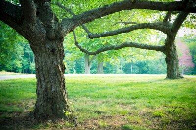 Plakat Piękne letnich drzew i trawy w otoczeniu parku