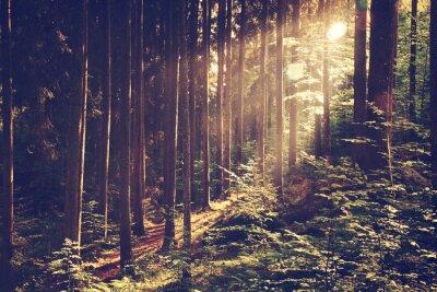 Plakat Piękne senne lasu