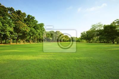 Plakat piękne światło poranka w publicznym parku z zielona trawa w terenie