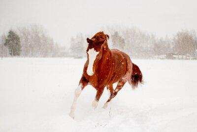 Plakat Piękny kasztanowca działa w dziedzinie śniegu darmo