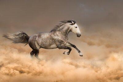 Plakat Piękny koń galop bieg w pyle