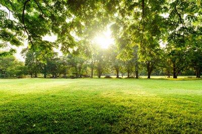 Plakat Piękny krajobraz w parku z drzewem i zielonej trawy polem przy rankiem.