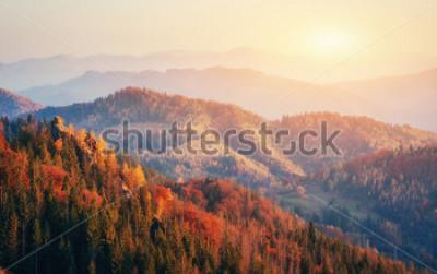 Plakat Piękny widok na las w słoneczny dzień. Jesień krajobraz. Karpaty Ukraina, Europa