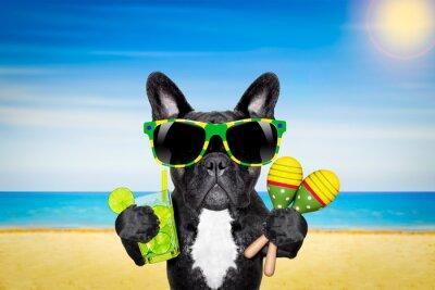 Plakat Pies plaży latem koktajl