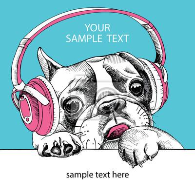 Pies Portret Buldog francuski ze słuchawkami. ilustracji wektorowych.