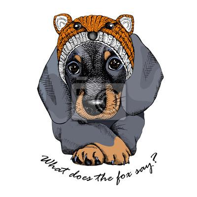 Plakat z portretem pies Jamnik w kapeluszu Fox. ilustracji wektorowych.