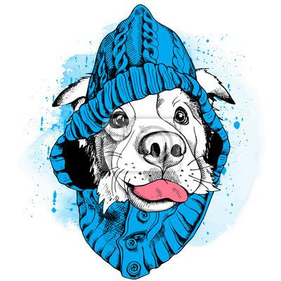 Plakat z wizerunkiem psa Owczarek australijski w kapturze. ilustracji wektorowych.