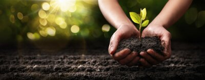 Plakat Plant in Hands. Ecology concept. Nature Background