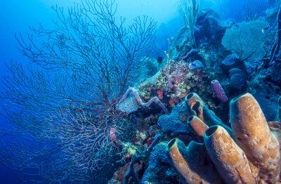 Plakat Podwodne rafy koralowej