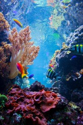 Plakat Podwodne sceny z ryb, rafa koralowa