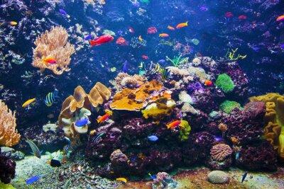 Plakat Podwodne sceny z ryb, rafy koralowej