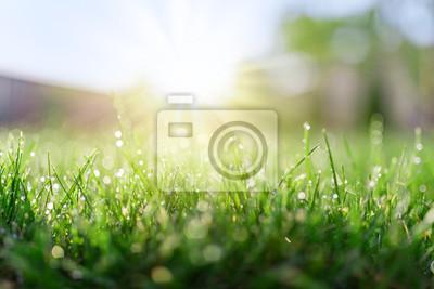 Plakat Pole trawy w słoneczny poranek