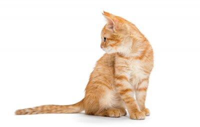 Plakat Pomarańczowy, paski, mały kotek