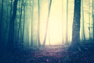 Plakat Przerażające żółty zielony nasycony rocznika mglisty krajobraz drzew leśnych. Filtr koloru i rocznika efekt filtr.