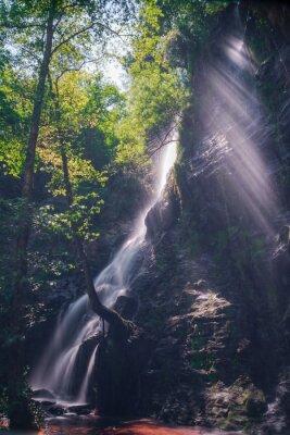 Plakat Rayos de Sol A Traves de las hojas del Bosque en La Cascada de Hortas, Galicja