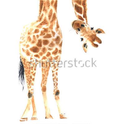 Plakat Realistyczna żyrafa robić w akwareli. Praca. Ręcznie z ilustracją