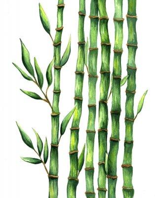 Plakat Ręcznie rysowane bambus ilustracja akwarela