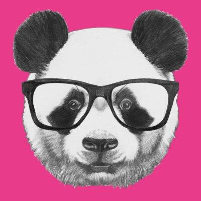 Plakat Ręcznie rysowany portret Panda z okularami. Vector pojedyncze elementy.
