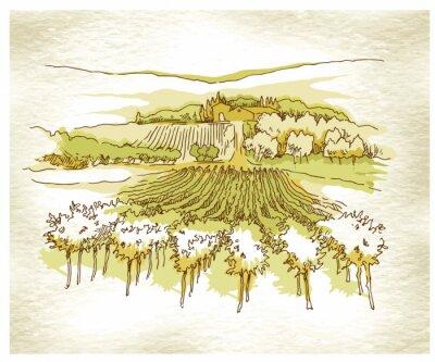 Plakat Ręcznie wykonane szkicu winogron pola i winnice.