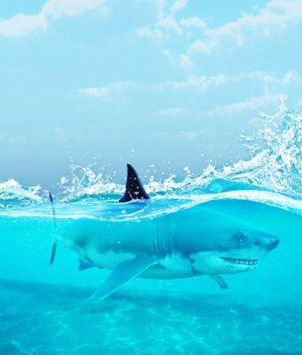 Plakat Rekin pod wodą, 3d ilustracja
