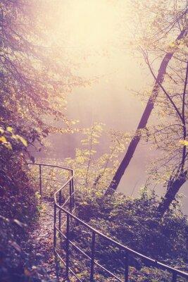 Plakat Retro filtrowany obraz drogi w lesie.