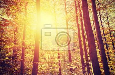 Plakat Retro stonowanych obraz jesienny las o zachodzie słońca.