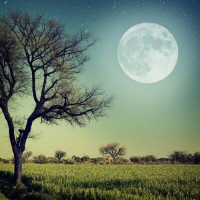 Plakat Romantyczny wieczór w świetle księżyca