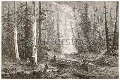 Plakat Rosyjska jedlinova lasova stara ilustracja. Stworzony przez Moyneta, opublikowany Le Tour du Monde, Paryż, 1867