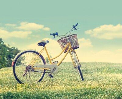 Plakat Rower na polu kwiat biały i trawa w słońcu tle przyrody