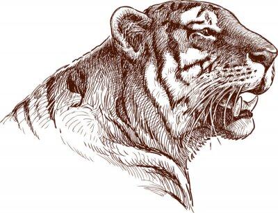 Plakat ryk tygrysa
