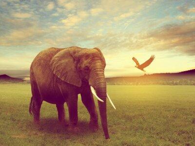 Plakat Sceneria tym słoń afryki