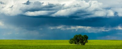 Plakat Scenic View Of Grassy Field Against Cloudy Sky