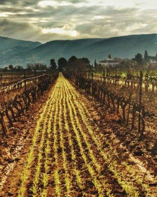 Plakat Scenic View Of Vineyard Against Sky