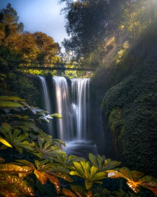 Plakat Scenic View Of Waterfall In Forest