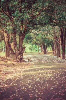 Plakat Ścieżka pod tunelem drzew z kwiatami w atmosferze rocznika