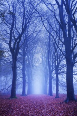 Plakat Ścieżka w ciemnym i mglisty las w Holandii