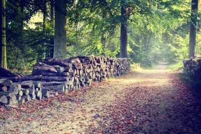 Plakat Ścieżka w lesie jesienią
