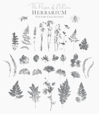 Plakat Set of dried herbs and natural plants and bees - herbarium logo collection on white background