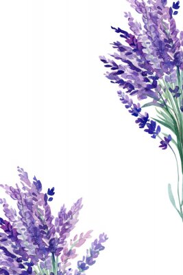 Plakat set of lavender flowers elements on an isolated white background, watercolor illustration, hand drawing, greeting card with a place for text