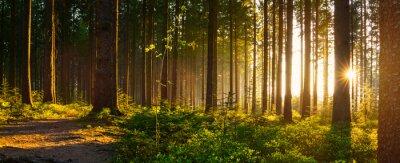 Plakat Silent Forest na wiosnę z pięknymi jasnymi promieniami słońca