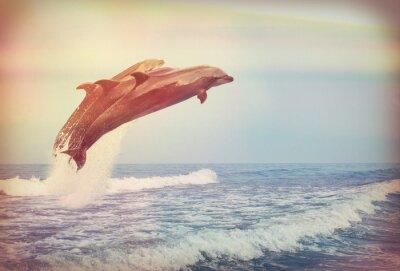 Plakat Skoki delfinów, Instagram