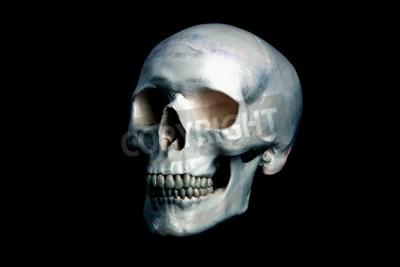 skull black backround