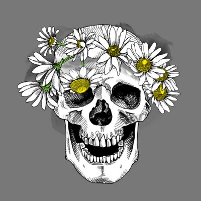 Skull in a Chamomile crown. Vector illustration.