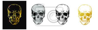 Skull vector set Hand drawn design. Grey skull, gold skull, black and white skull, ocher skull isolated on white background.  Vector illustration EPS 10