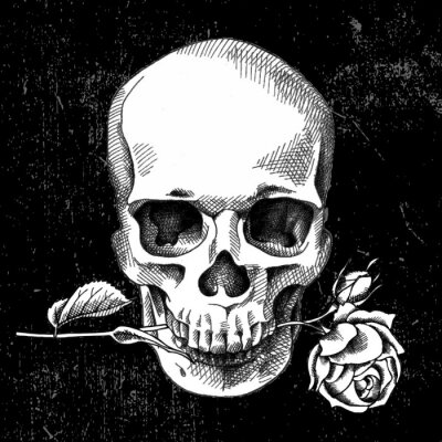 Skull with rose. Black and white. On the black background. Vector illustration.