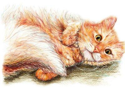 Plakat Śliczne ładne imbir puszysty kot wyciągnąć rękę sztuka