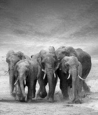 Plakat Słoń