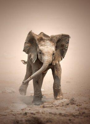 Plakat Słoń cielę makiety ładowania