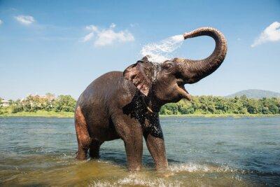 Plakat Słoń pranie w rzece