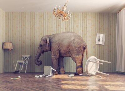 Plakat słoń w pokoju